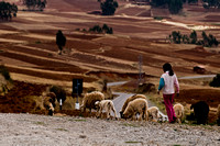 sacred valley-0515